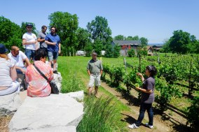 discussing viniculture